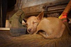 Cão do sono na casa de bambu no lago Inle em Burma, Ásia imagens de stock