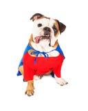 Cão do super-herói Foto de Stock Royalty Free