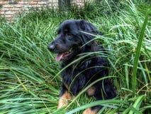 Cão do Sweetie imagem de stock royalty free