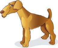 Cão do terrier do Airedale Imagens de Stock