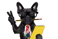 Cão do trabalhador de escritório Foto de Stock Royalty Free