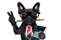 Cão do trabalhador de escritório Imagens de Stock Royalty Free