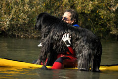 Cão do treinamento da água Imagem de Stock
