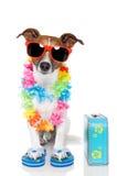 Cão do turista fotografia de stock