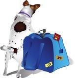 Cão do turista Foto de Stock Royalty Free