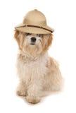Cão do tzu de Shih que veste um chapéu dos exploradores do safari foto de stock royalty free