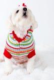 Cão do urro Fotos de Stock