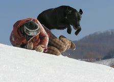 Cão do vôo fotos de stock
