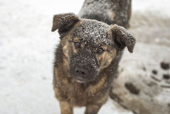 Cão do vagabundo Imagens de Stock