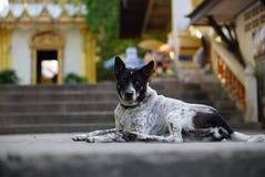 Cão do vagabundo que encontra-se no assoalho Fotos de Stock