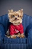 Cão do Valentim Imagens de Stock Royalty Free