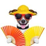 Cão do verão imagem de stock