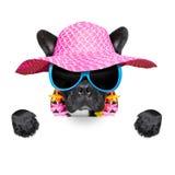 Cão do verão do feriado Fotos de Stock Royalty Free
