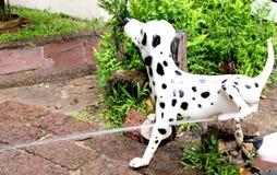Cão do xixi imagem de stock