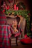 Cão do yorkshire terrier, ano novo, Natal Imagem de Stock