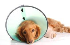 Cão doente imagem de stock