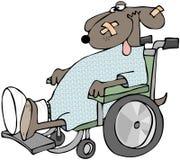 Cão doente em uma cadeira de rodas Fotos de Stock Royalty Free