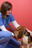 Cão doente no veterinário Fotos de Stock
