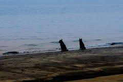 Cão dois que olha o mar em uma praia tropical Imagens de Stock