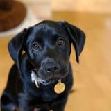 Cão doméstico bonito imagens de stock
