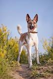 Cão doméstico e flores amarelas fotografia de stock royalty free