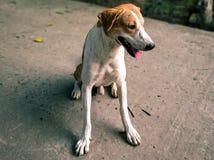 Cão doméstico na região rural imagem de stock