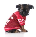 Cão dos esportes Imagem de Stock