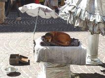 Cão dos executores da rua que dorme sob um guarda-chuva Imagens de Stock Royalty Free
