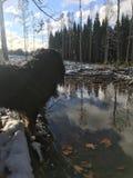 Cão e água fotografia de stock royalty free