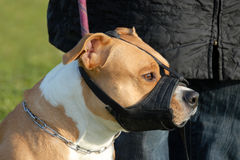 Cão e açaime Imagem de Stock