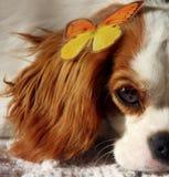 Cão e borboleta Fotos de Stock Royalty Free