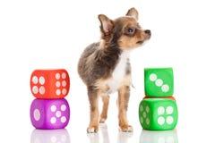 Cão e brinquedos isolados no fundo branco Fotos de Stock