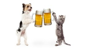Cão e Cat Celebrating With Beer Cheer fotos de stock royalty free
