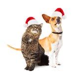 Cão e Cat Looking Up Together Fotografia de Stock Royalty Free
