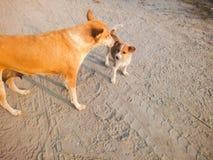 Cão e filhote de cachorro Fotos de Stock