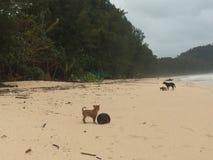 Cão e filhote de cachorro da praia Foto de Stock Royalty Free