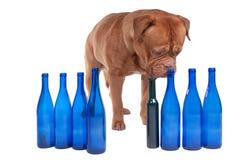 Cão e frascos de vinho vazios fotos de stock royalty free