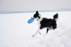 Cão e frisbee Fotos de Stock Royalty Free