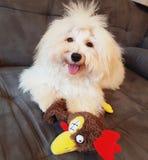 Cão e galinha Foto de Stock