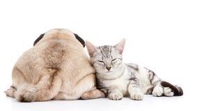 Cão e gato Foto de Stock