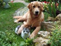 Cão e gato Imagens de Stock