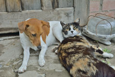 Cão e gato 1 Imagem de Stock