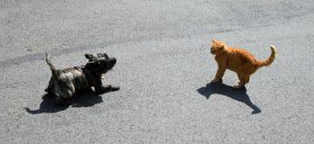 Cão e gato Fotografia de Stock