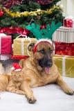Cão e gato de dois melhores amigos na noite de Natal Fotos de Stock Royalty Free