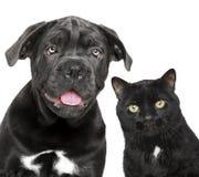 Cão e gato junto Imagens de Stock Royalty Free