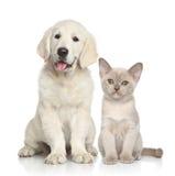 Cão e gato junto Fotos de Stock