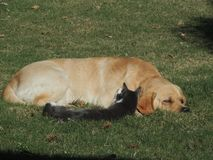 Cão e gato, melhores amigos imagens de stock