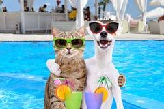 Cão e gato que abraça-se, guardando cocktail nas patas fotos de stock royalty free