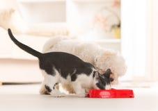 Cão e gato que come o alimento de uma bacia imagem de stock