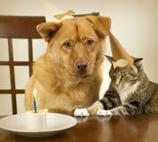 Cão e gato que comemoram o aniversário Imagens de Stock Royalty Free